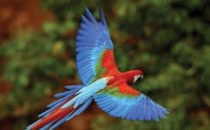 Bolivian bird species in danger