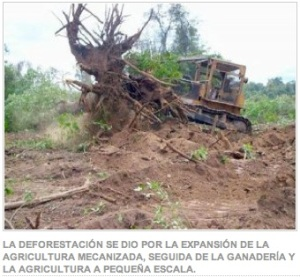 Bolivian deforestation 101