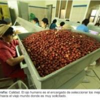 Peanuts' origin is the Chaco region, Chuquisaca exports big time!!
