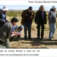 Bolivian chuno and tunta [which are processed potato] have interesting properties against diabetes and overweight!