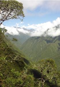 Los bosques de los Yungas albergan la mayor cantidad de especies de plantas.