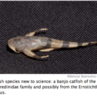 Seven new animal species discovered in Bolivia: MADIDI