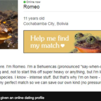 Bolivia's lonely frog: Scientists race to find mate for Romeo