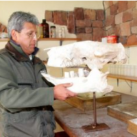 Museum conserves giant mammal skull in Oruro