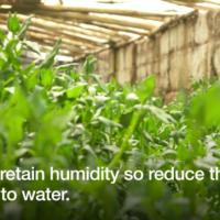 Growing underground to avoid drought