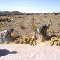 Bolivia with the lowest agricultural yield