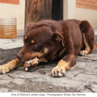 "Meet Bolivia's Dog Savior, Fernando ""Ferchy"" Kushner"