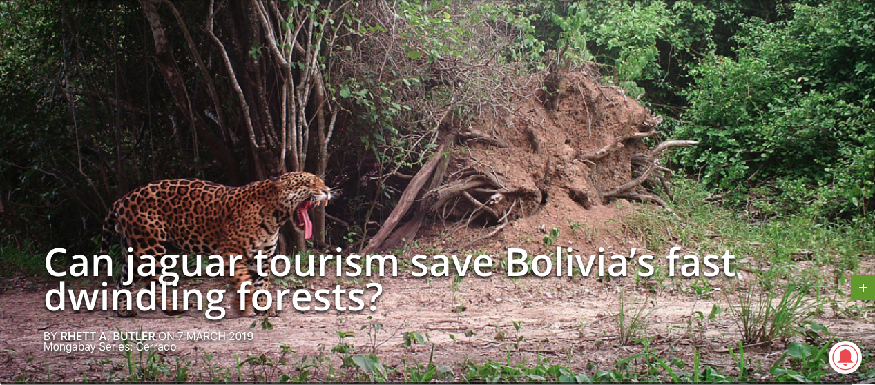 Can jaguar tourism save Bolivia's fast dwindling forests?