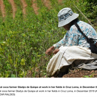 'There'll be war' if Bolivia cuts coca growing, farmers warn [Should we say: narcotraffick will fund and want that war?!]